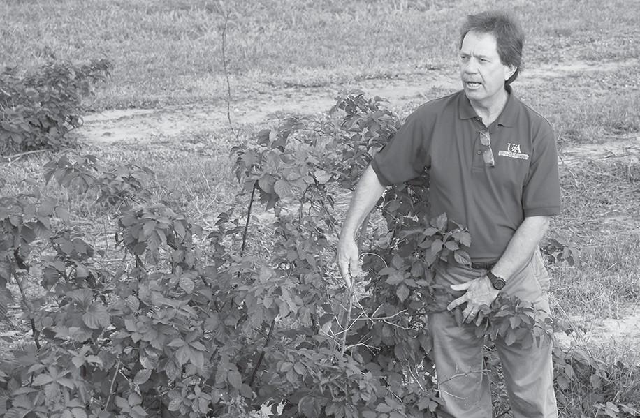 Dr. John Clark discusses blackberry varieties he developed at the University of Arkansas.