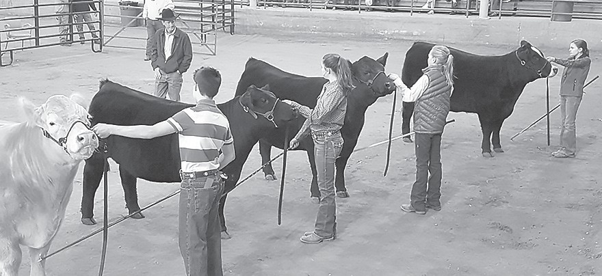 The 2019 4-H/FFA Steer and Heifer Show is right around the corner.