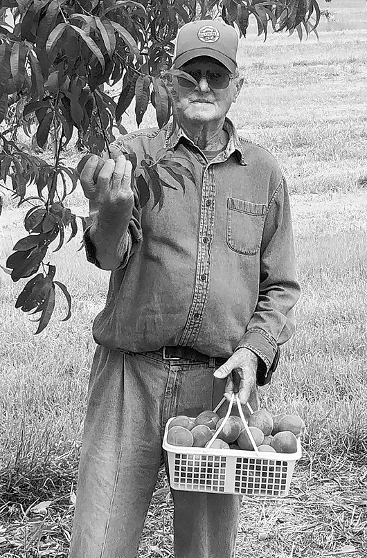 Marvin Hazelrig is still picking peaches at age 86. -John McRae
