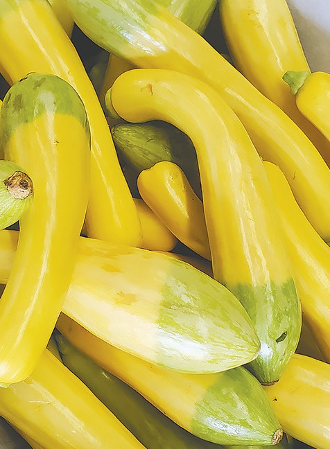 Zephyr squash (a yellow/zucchini hybrid) is available at Allman Farm and Orchard.